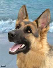 Pet Portrait of Sophie, a German Shepherd from San Francisco