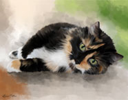 Claire is a Tortoiseshell cat - portrait