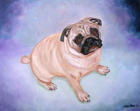 A Pug Dog named alvin